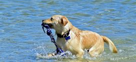 Dog Bathing Tips