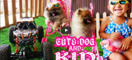 Funny Dog Playing with Kids – Cute Dog and Kids Compilation