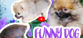 Funny Dog Play with Turtle and Play with Kids – Cute Dogs Compilation, 4K VIDEO
