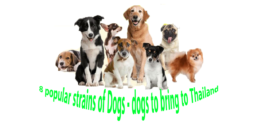 8 popular strains of Dogs – dogs to bring to Thailand